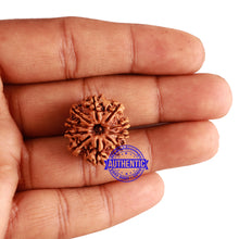 Load image into Gallery viewer, 10 Mukhi Nepalese Rudraksha - Bead No. 255