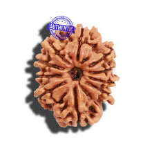 Load image into Gallery viewer, 10 Mukhi Nepalese Rudraksha - Bead No 6