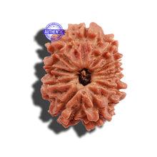 Load image into Gallery viewer, 10 Mukhi Nepalese Rudraksha - Bead No 9