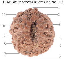 Load image into Gallery viewer, 11 Mukhi Indonesian Rudraksha - Bead No. 110