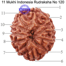 Load image into Gallery viewer, 11 Mukhi Indonesian Rudraksha - Bead No. 120