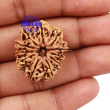 Load image into Gallery viewer, 11 Mukhi Nepalese Rudraksha - Bead No. 163