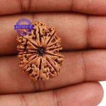 Load image into Gallery viewer, 11 Mukhi Nepalese Rudraksha - Bead No. 167