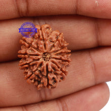 Load image into Gallery viewer, 11 Mukhi Nepalese Rudraksha - Bead No. 171