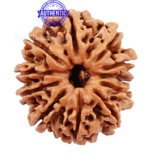 Load image into Gallery viewer, 11 Mukhi Nepalese Rudraksha - Bead No. 182