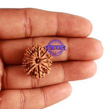 Load image into Gallery viewer, 11 Mukhi Nepalese Rudraksha - Bead No. 212