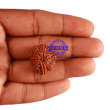 Load image into Gallery viewer, 11 Mukhi Nepalese Rudraksha - Bead No. 219
