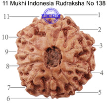 Load image into Gallery viewer, 11 Mukhi Indonesian Rudraksha - Bead No. 138