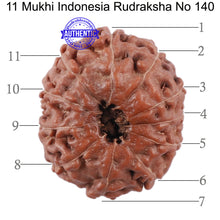 Load image into Gallery viewer, 11 Mukhi Indonesian Rudraksha - Bead No. 140
