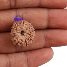 Load image into Gallery viewer, 11 Mukhi Indonesian Rudraksha - Bead No. 145