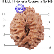 Load image into Gallery viewer, 11 Mukhi Indonesian Rudraksha - Bead No. 149