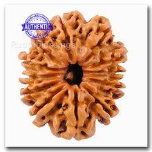 Load image into Gallery viewer, 12 Mukhi Nepalese Rudraksha - Bead No. 127