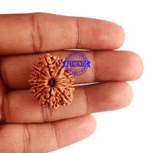 Load image into Gallery viewer, 12 Mukhi Nepalese Rudraksha - Bead No 155