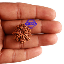 Load image into Gallery viewer, 12 Mukhi Nepalese Rudraksha - Bead No 220