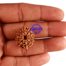 Load image into Gallery viewer, 12 Mukhi Nepalese Rudraksha - Bead No 230