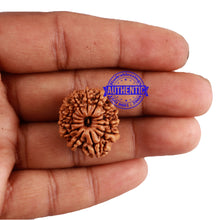 Load image into Gallery viewer, 13 Mukhi Nepalese Rudraksha - Bead No. 147