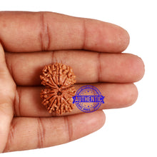Load image into Gallery viewer, 13 Mukhi Nepalese Gaurishankar Rudraksha - Bead No. 156