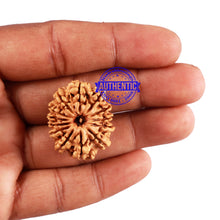 Load image into Gallery viewer, 13 Mukhi Nepalese Rudraksha - Bead No. 157