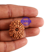 Load image into Gallery viewer, 13 Mukhi Nepalese Rudraksha - Bead No. 158