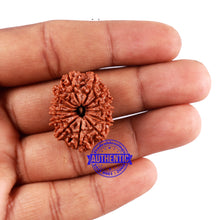 Load image into Gallery viewer, 13 Mukhi Nepalese Rudraksha - Bead No. 162
