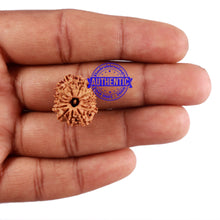 Load image into Gallery viewer, 13 Mukhi Nepalese Rudraksha - Bead No. 171