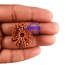 Load image into Gallery viewer, 13 Mukhi Nepalese Rudraksha - Bead No. 172
