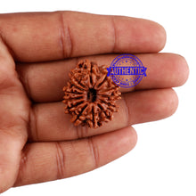Load image into Gallery viewer, 13 Mukhi Nepalese Rudraksha - Bead No. 174