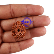 Load image into Gallery viewer, 13 Mukhi Nepalese Rudraksha - Bead No. 180