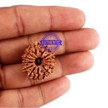 Load image into Gallery viewer, 13 Mukhi Nepalese Rudraksha - Bead No. 185
