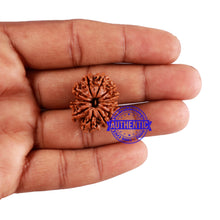 Load image into Gallery viewer, 13 Mukhi Nepalese Rudraksha - Bead No. 191