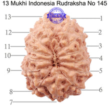 Load image into Gallery viewer, 13 Mukhi Indonesian Rudraksha - Bead No. 145