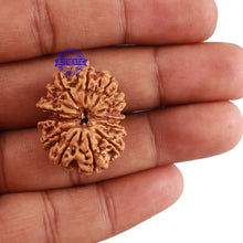 Load image into Gallery viewer, 13 Mukhi Nepalese Rudraksha - Bead No. 114