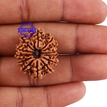 Load image into Gallery viewer, 13 Mukhi Nepalese Rudraksha - Bead No 119