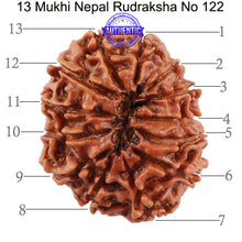 Load image into Gallery viewer, 13 Mukhi Nepalese Rudraksha - Bead No. 122