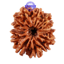 Load image into Gallery viewer, 13 Mukhi Nepalese Rudraksha - Bead No. 140
