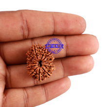 Load image into Gallery viewer, 13 Mukhi Nepalese Rudraksha - Bead No. 143
