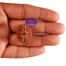 Load image into Gallery viewer, 13 Mukhi Nepalese Rudraksha - Bead No. 197