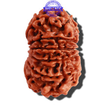 Load image into Gallery viewer, 13 Mukhi Nepalese Rudraksha - Bead No. 208
