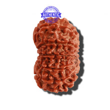 Load image into Gallery viewer, 13 Mukhi Nepalese Rudraksha - Bead No. 219