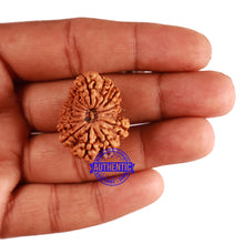 Load image into Gallery viewer, 14 Mukhi Nepalese Rudraksha - Bead No. 232