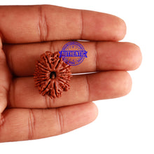 Load image into Gallery viewer, 14 Mukhi Nepalese Rudraksha - Bead No. 243