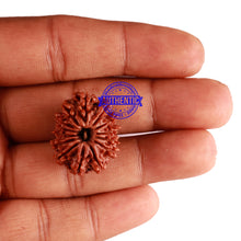 Load image into Gallery viewer, 14 Mukhi Nepalese Rudraksha - Bead No. 252