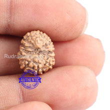 Load image into Gallery viewer, 14 mukhi Indonesian Rudraksha -  Bead No. 144