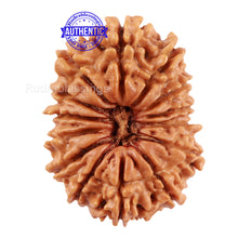 Load image into Gallery viewer, 14 Mukhi Nepalese Rudraksha - Bead No. 208