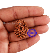 Load image into Gallery viewer, 14 Mukhi Nepalese Rudraksha - Bead No. 219