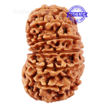 Load image into Gallery viewer, 14 Mukhi Nepalese Rudraksha - Bead No. 227