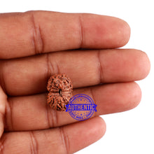 Load image into Gallery viewer, 14 mukhi Indonesian Rudraksha -  Bead No. 205