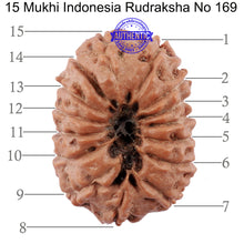 Load image into Gallery viewer, 15 Mukhi Indonesian Rudraksha - Bead No. 169