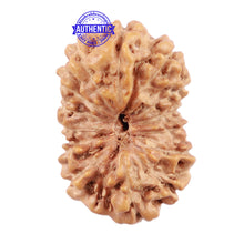 Load image into Gallery viewer, 15 Mukhi Indonesian Rudraksha - Bead No. 177
