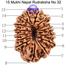Load image into Gallery viewer, 15 Mukhi Rudraksha from Nepal - Bead No. 32